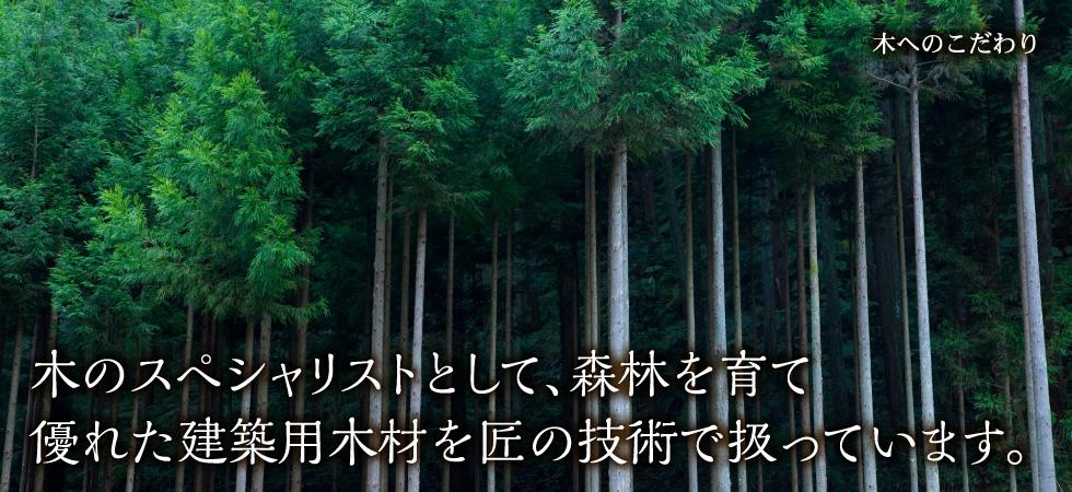 木へのこだわり|木のスペシャリストとして、森林を育て優れた建築用木材を匠の技術で扱っています。