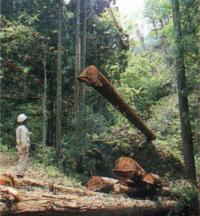 「地元の木をふんだんに使う」ことが理想です。